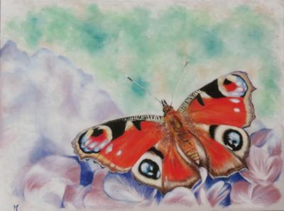 Papillon1 ptt