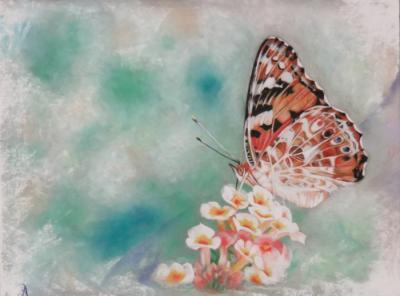Papillon2 ptt