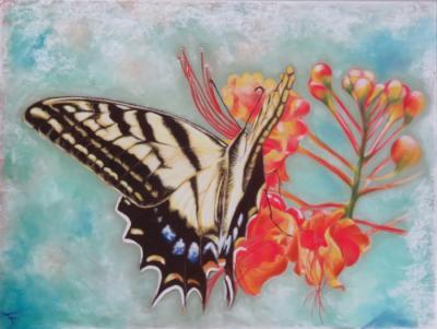 Papillon3 ptt