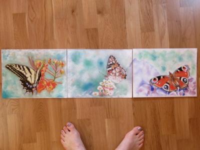 Papillons ptt 2